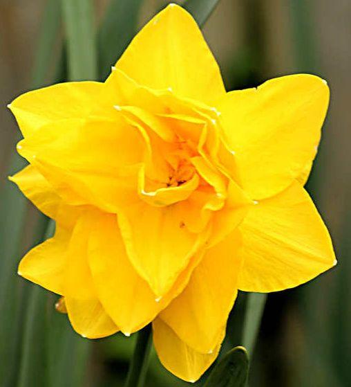 Onze parfumexpert roept ruik die lentezon haal de geuren in huis