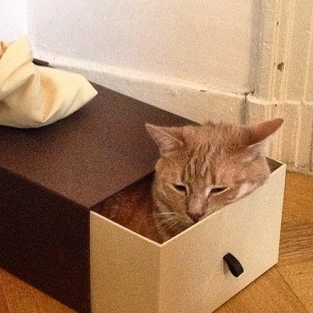 Jack in the box #cat #readhead #shoebox