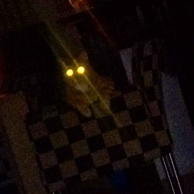 #halloween is in da house #catstagram #cat #flashlight #photo #iphone4 #badpicutre