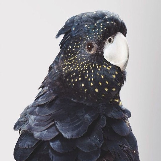 #birds and #feathers #black