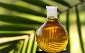 Palmolie draagt bij aan ontbossing