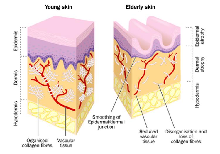 Alpha-H Younger Skin versus Older Skin