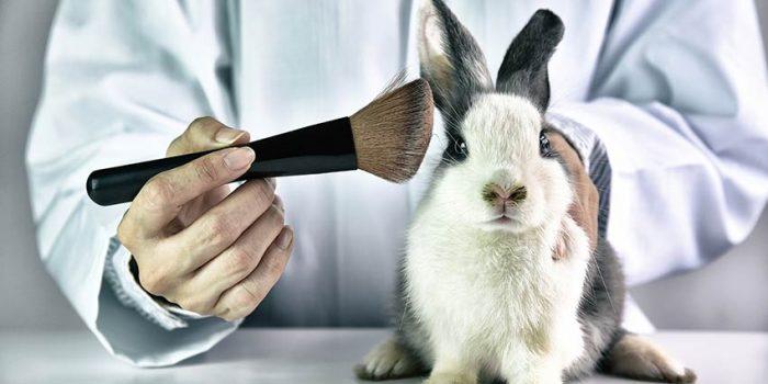 Dierproeven cosmetica konijn