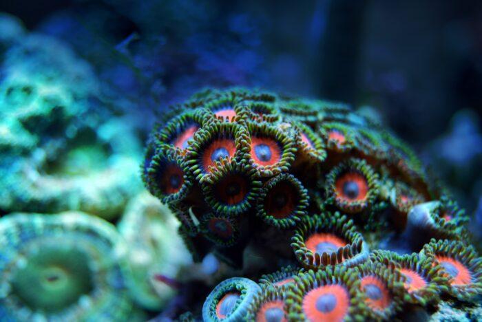 zee koraal