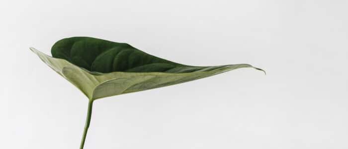groene skincare