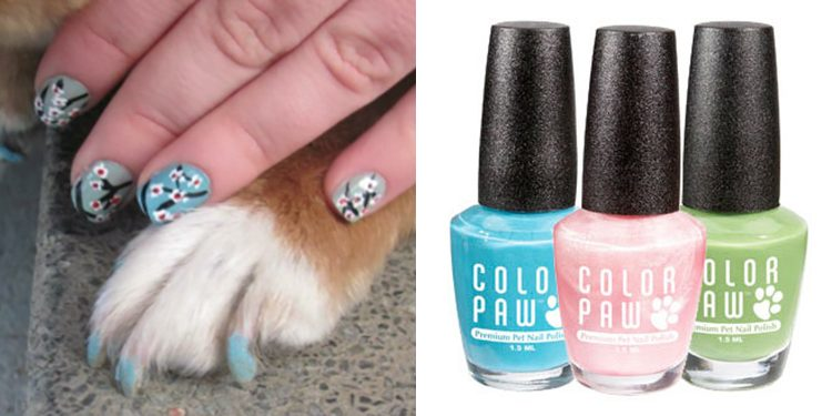 Homepage Colow Paw