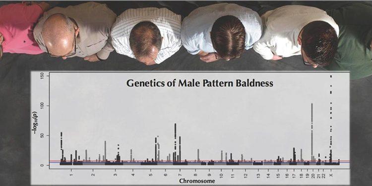 Homepage Kaalheid en Genetica