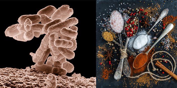 ua-microbioomspecerijen