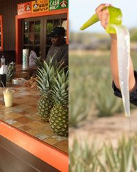 Homepage Aruba Aloe