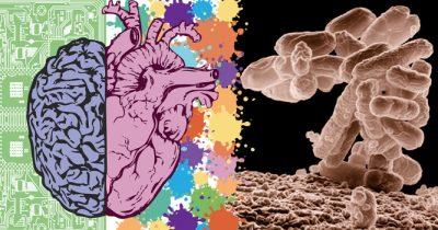 ua-hersenmicrobioom