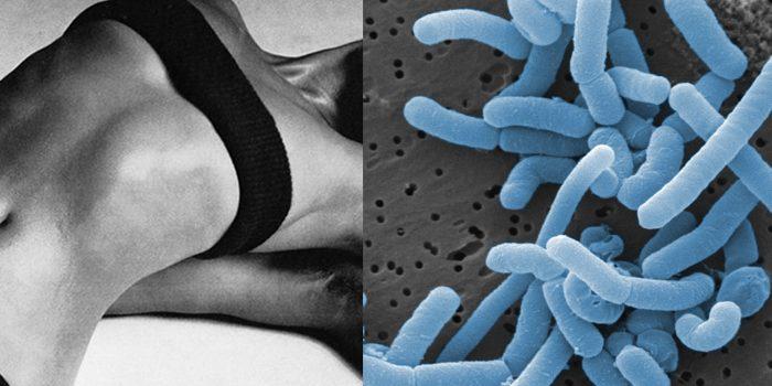 ua-probiotica
